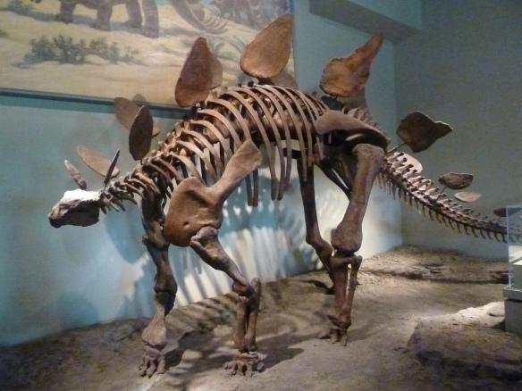 Field Museum-Dinosaur Exhibit