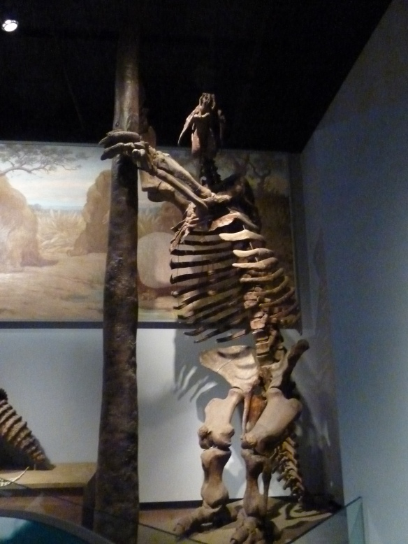 Field Museum Giant Sloth