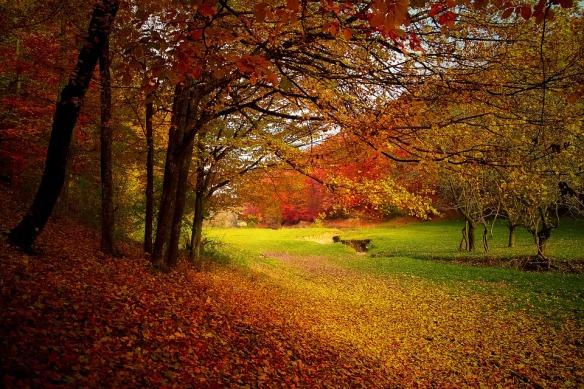 autumn-1072827_960_720-pixabay