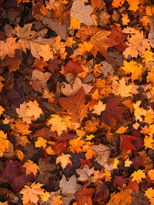 fall-foliage-111315_960_720-pixabay