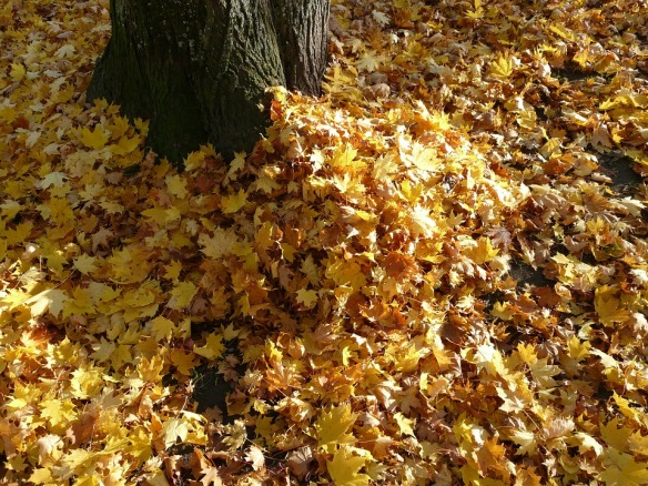 leaf-piles-62808_960_720-pixabay