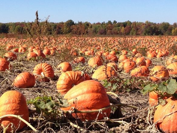 pumpkins-92101_960_720-pixabay
