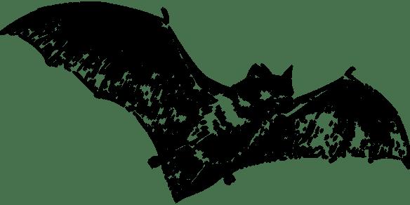 bat-147038_960_720-pixabay