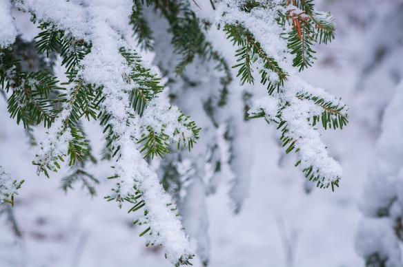 winter-1971916_960_720-pixabay